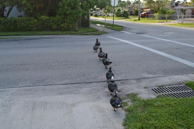 Pratos cruzando a avenida