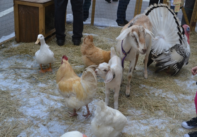 The Little Farm - Gentle Farm Animals